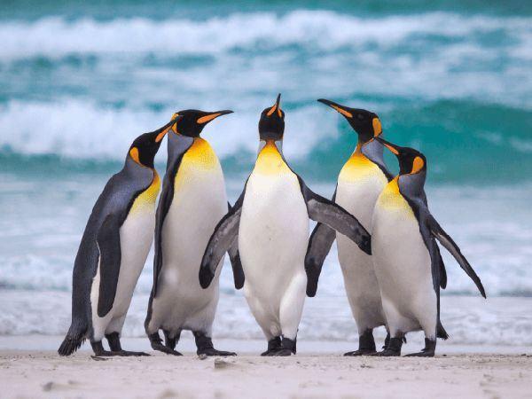 Mơ thấy chim cánh cụt là điềm báo hên hay xui, có ý nghĩa gì?
