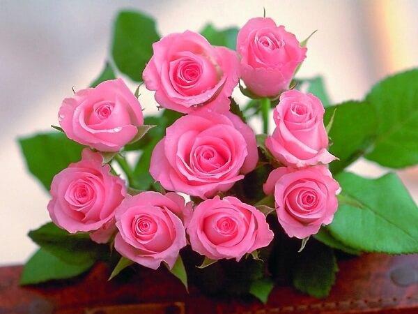 Chiêm bao thấy hoa hồng điềm báo gì