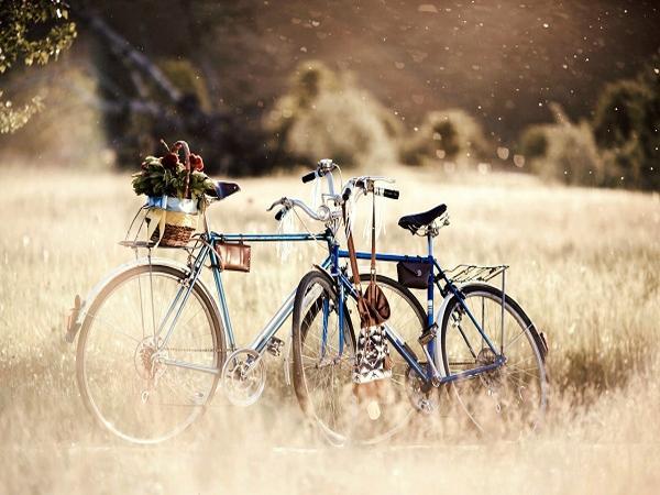 Mơ mất xe đạp đánh con gì