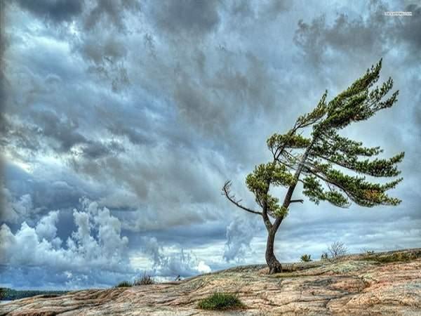Mơ thấy gió là điềm báo gì, đánh số gì may mắn